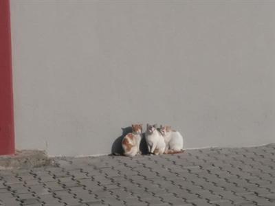 Kırkağaç MYOda Bahar - 2196